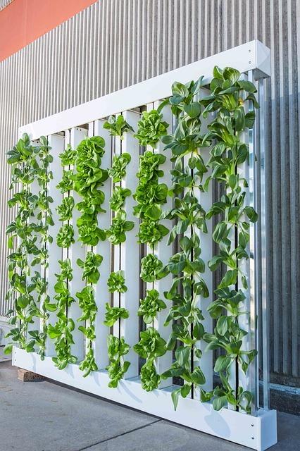 cultivo-hidroponico-vertical